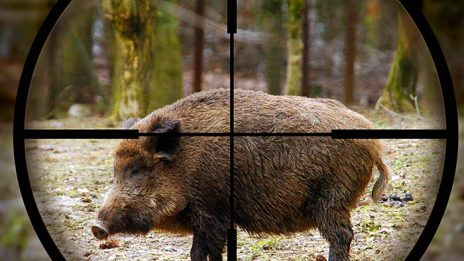 37746744-hunting-pictures1
