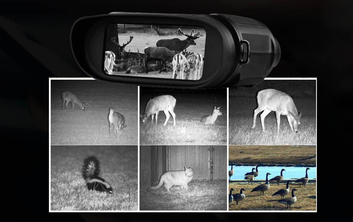 the best cheap night vision binoculars for sale